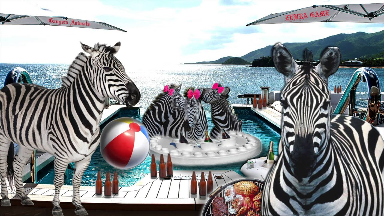 Uncategorized Zebra Game gangsta animals zebra game youtube game