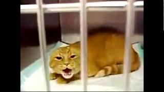 коты и кошки укуренные угорают