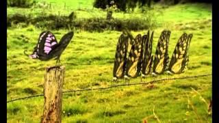 Csodabogarak - Rondaság (3.évad 1. rész)