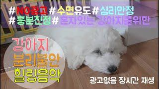 [NO광고, 10시간] 강아지가 좋아하는 음악 분리불안완화/짖음완화/수면유도/휴식/힐링