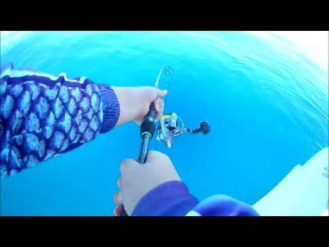 Deepwater Reef Fishing Central Queensland! | BoofBite Fishing