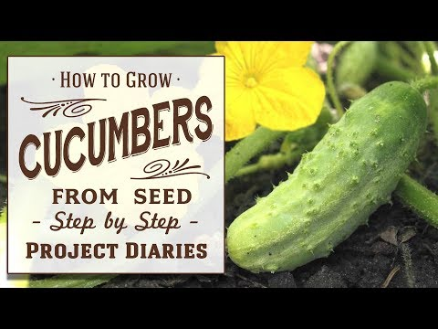 ★ How to: Grow Cucumbers from Seed (A Complete Step by Step Guide)