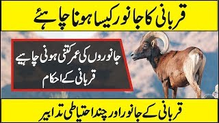 Eid-ul-Adha Aur Falsfa e Qurbani | Why do Muslims sacrifice and Celebrate Eid-al-Adha in Urdu Hindi