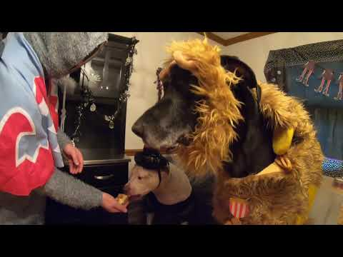 dogs-hilarious-howl-a-ween-birthday-bash-🎂🐕🎃🧙🏻‍♀️👠🦁🎉