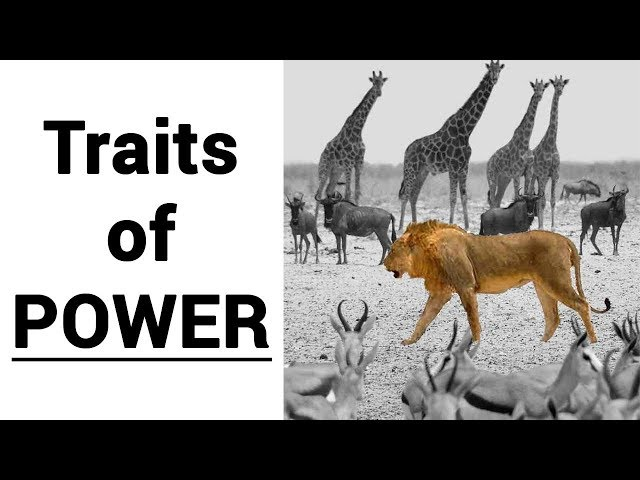 Signs of Dominance: How Social Power Looks LIke