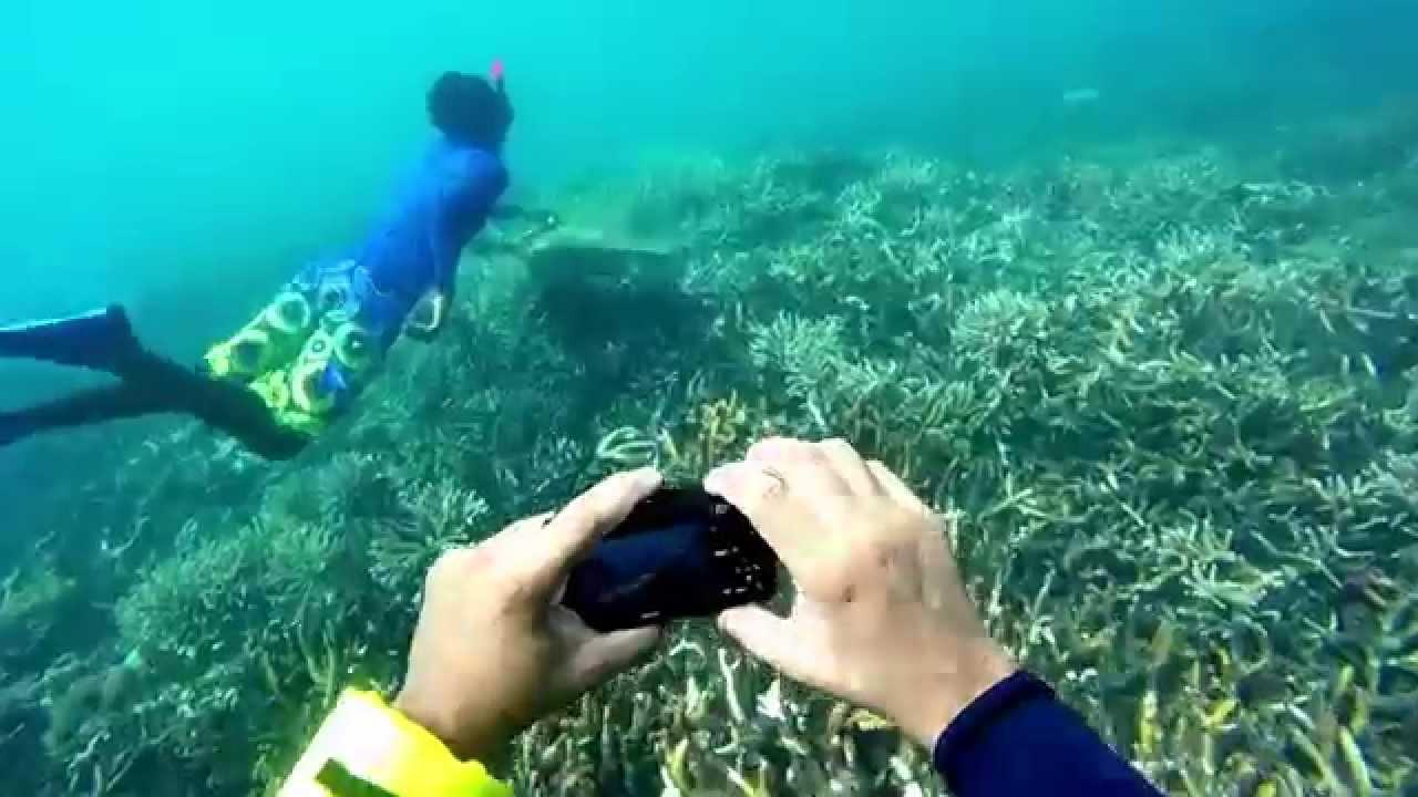 St Lucia Pigeon Island Snorkeling