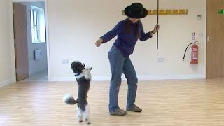 Dancing with dogs: an introduction