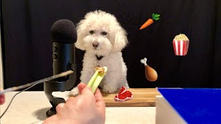 ASMR Dog Reviews Different Foods!