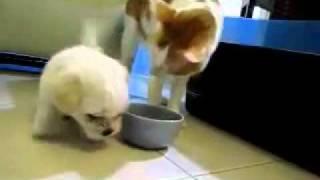 Drsný svět – web nejen pro muže, vtipná videa, porno, hnus a brutální videa » Pes se snaží zakousnout kočku