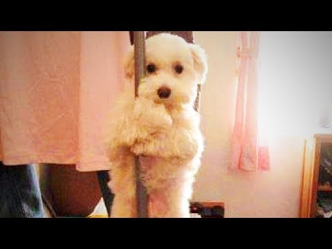 Dancing Dogs 😍🐶Funny and Cute Dogs Dancing (Part 2) [Funny Pets]