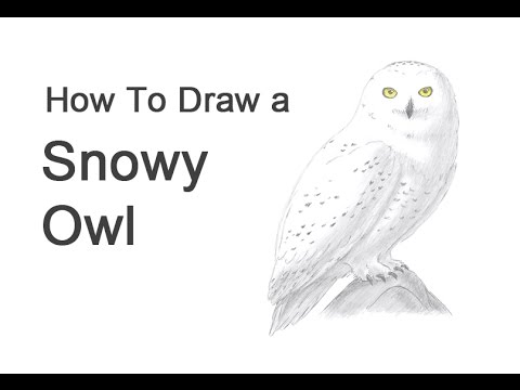 how to draw a snowy owl youtube