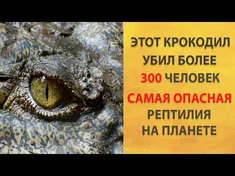 Самый опасный крокодил в истории человечества