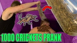 1000 LIVE CRICKETS IN BED PRANK! (GONE WRONG)