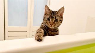お風呂で入浴中に乱入して湯加減チェックをしにきた子猫w