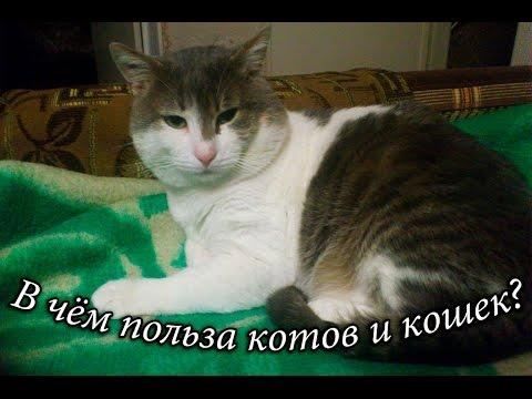Чем полезны коты и кошки?