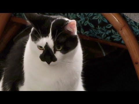 Boo Day 114 - No TNR Database Something Is Wrong - The Lucky Ferals