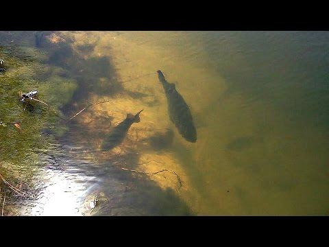 BED FISHING Lake Fork   Texas Bass Fishing Day 2