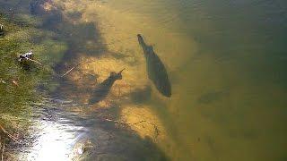 Video BED FISHING Lake Fork | Texas Bass Fishing Day 2 download MP3, 3GP, MP4, WEBM, AVI, FLV Juli 2018