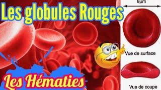 Les Globules Rouges (Les Hématies ou les érythrocytes)  [[ Immunologie / Physiologie Animale ]]