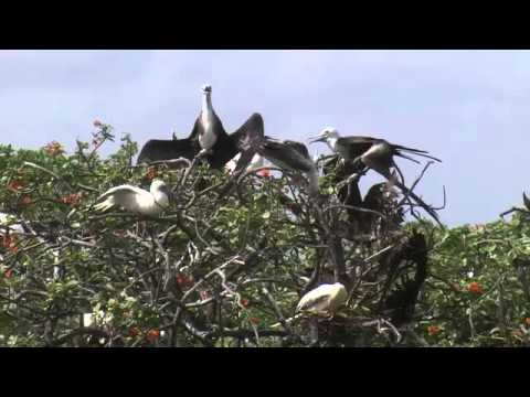 HD Nature Documentary Beauty of Nature- Central American