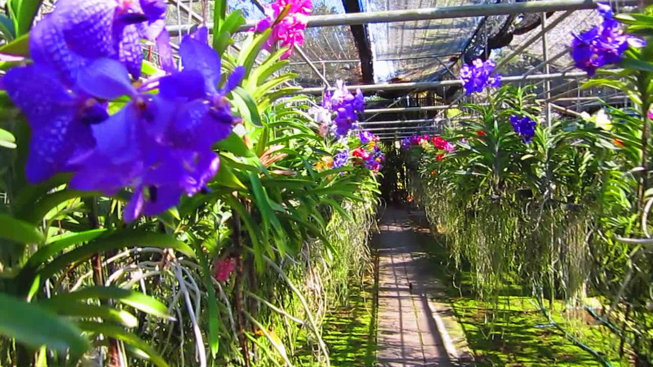 Chiang Mai Orchid Farm Youtube