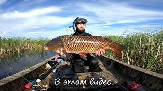 Рыбалка 2021 Трофей взят Охренел от таких кабанов ЁКЛМН Рыбалка на сазана Рыбалка 2021