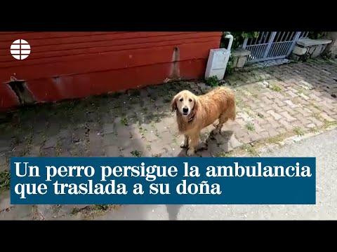 Un perro persigue la ambulancia que traslada a su dueña al hospital