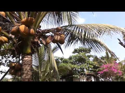 Отель Chalston Beach Resort 3* Индия, Гоа. Краткий обзор.