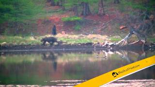 Bear Observation Tour - BaikalNature