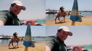 VLOG. КАТАЕМСЯ НА ВЕРБЛЮДЕ в Шарм Эль Шейхе Египет море