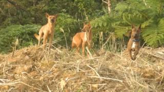 画面の奥は渓谷で、そこは野犬グループのアジト。 縄張りから野犬を追い...