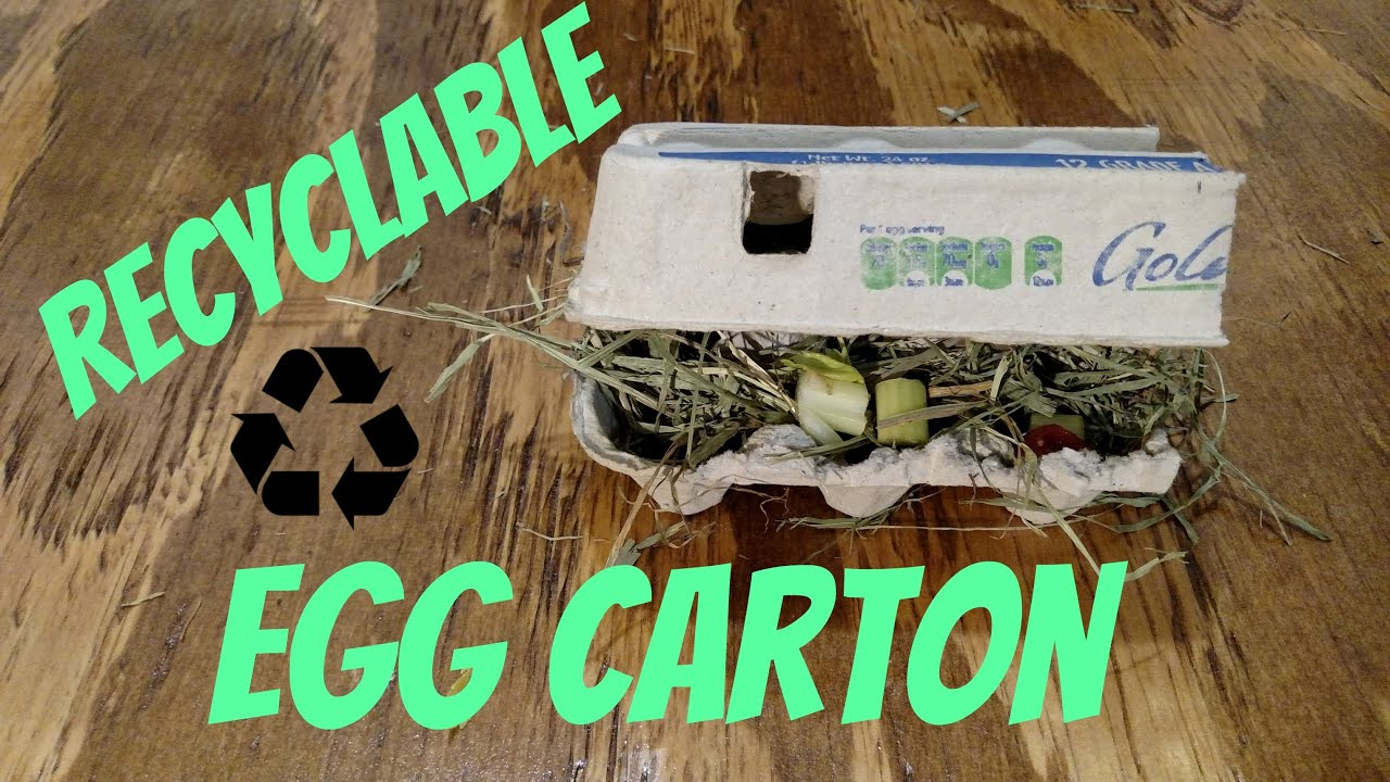 Diy guinea pig rabbit toys recyclable egg carton youtube for Diy guinea pig things