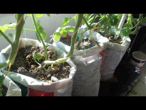 update #2 Make free DIY self watering grow bag for vegetable gardening