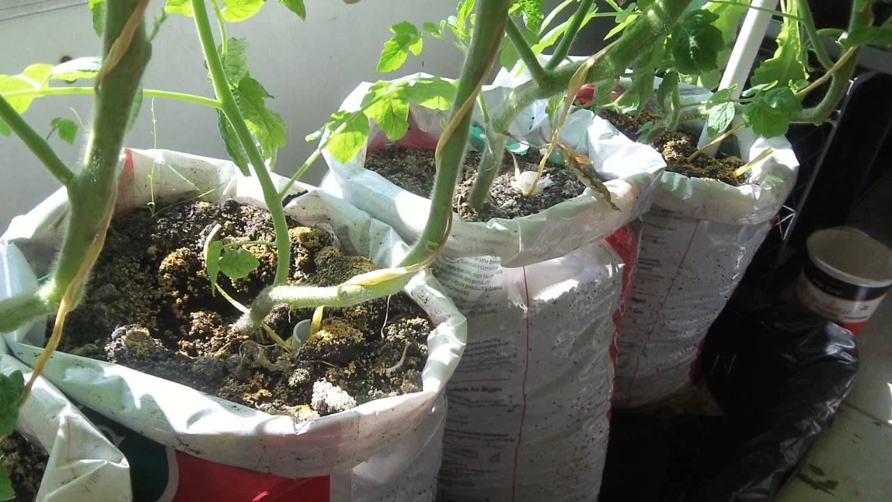Update #2 Make Free DIY Self Watering Grow Bag For Vegetable
