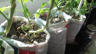 Update #2 Make Free Diy Self Watering Grow Bag For Vegetable Gardening