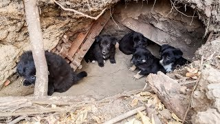 Как щенки становятся фотомоделями Путь бездомных щенков с улицы на экраны иsurvival of stray dogs
