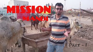 MISSION COW MANDI 2018 || TRAVEL VLOG || EP-04 || LIFESTYLE ENTERTAINMENT PAKISTAN