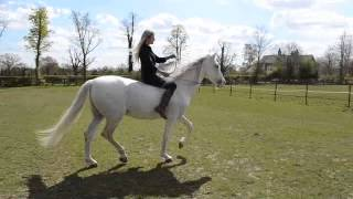 Mia Lykke Nielsen visit Lomond Stallions in England and trains horses.