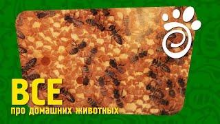 Пчелы Как Домашние Питомцы (Часть Первая). )Все О Домашних Животных