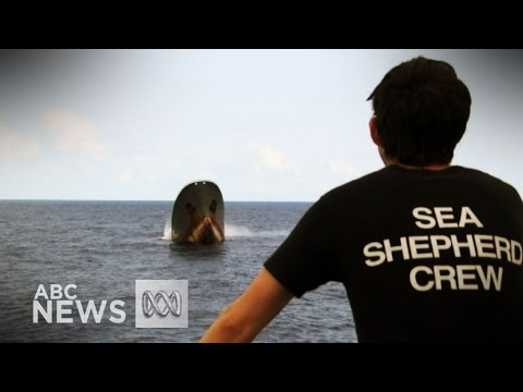 Donate - Direct Action Crew - Sea Shepherd Conservation ...