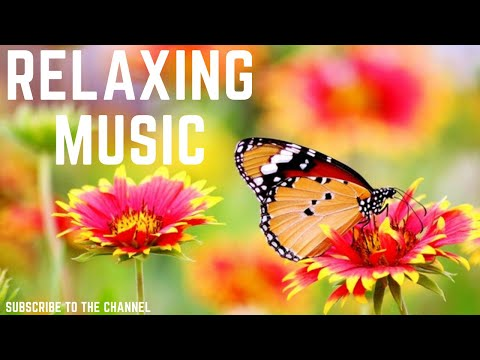 Relaxing Music - Flute Gentle Birds And Rainforest Sound