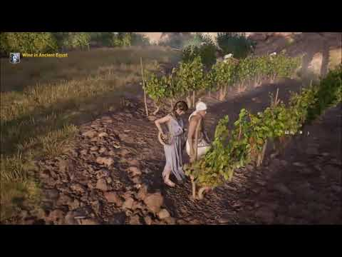 ACO Discovery Tour by Assassin's Creed: Ancient Egypt - Wine in Ancient Egypt