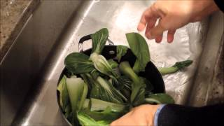 How To Cook Bok Choy With Garlic - Episode 3