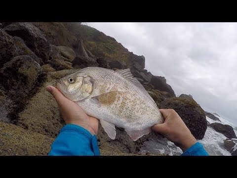 Shore Fishing The Oregon Coast! (Jumbo Perch)