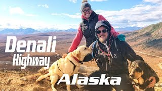 Wildlife, wild berries picking and fishing | Denali Highway, Alaska | Liveandgive4x4
