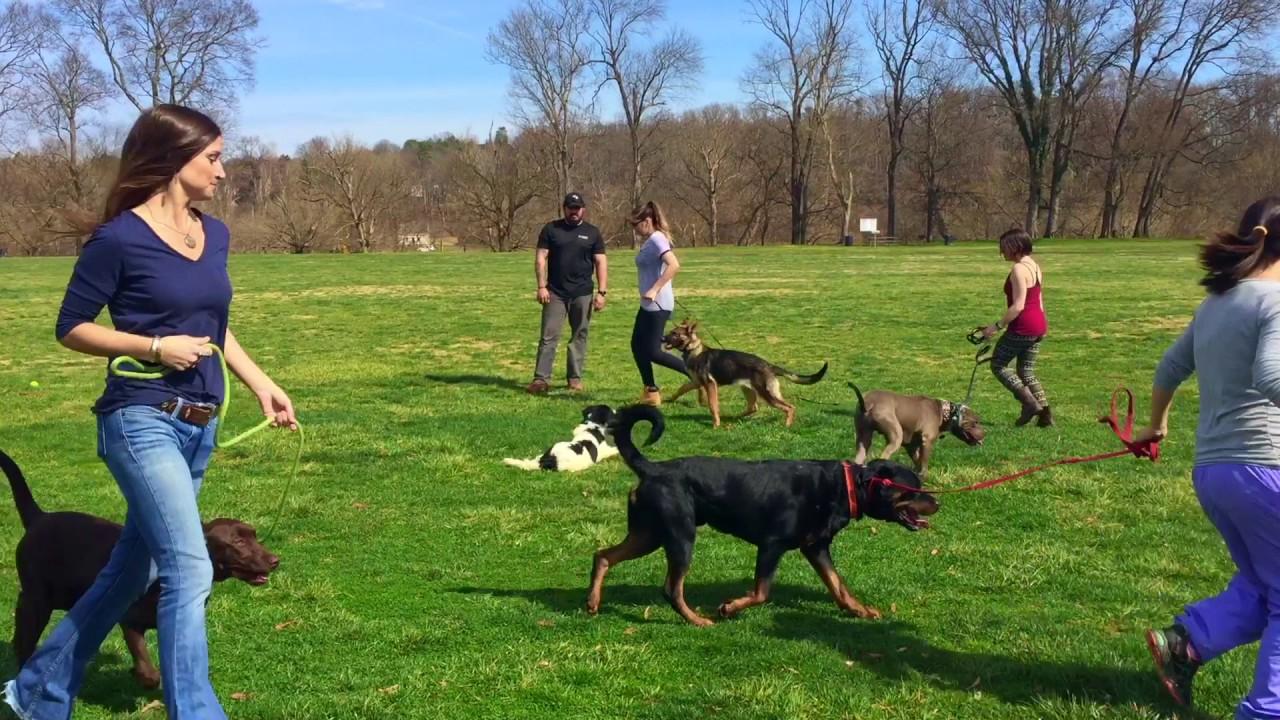 Collie, Suri! Collie Dog Training | Off Leash Collie Dog Trainers | Off  Leash K9 Training