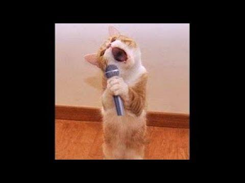 Drôle de chat et chien qui danse et chante  ... *