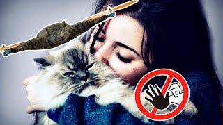 Почему целовать кошек опасно?