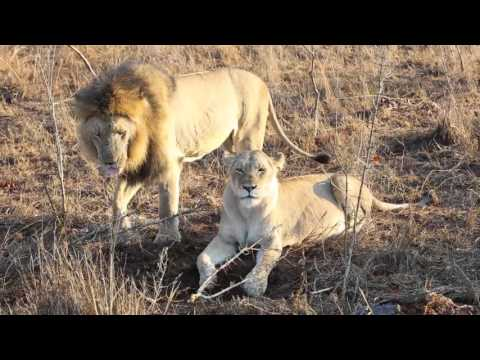 SEX on The Lion King ?!?!? from YouTube · Duration:  51 seconds