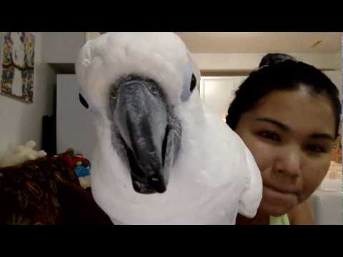Wellcome back to cockatoo luck live scream and with Tabasco :))